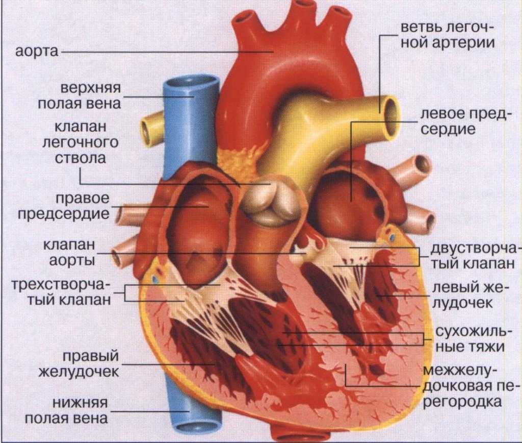 Ишемическая болезнь сердца рекомендации