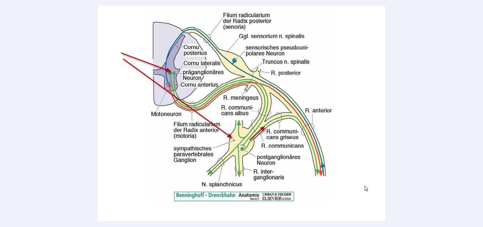 Симптомы и причины шейного миозита