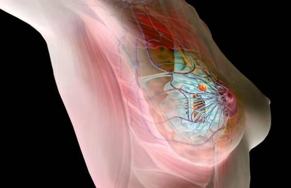 НАН Беларуси разработала новую технологию диагностики рака груди на 1 стадии за 1 минуту на основе нейросети